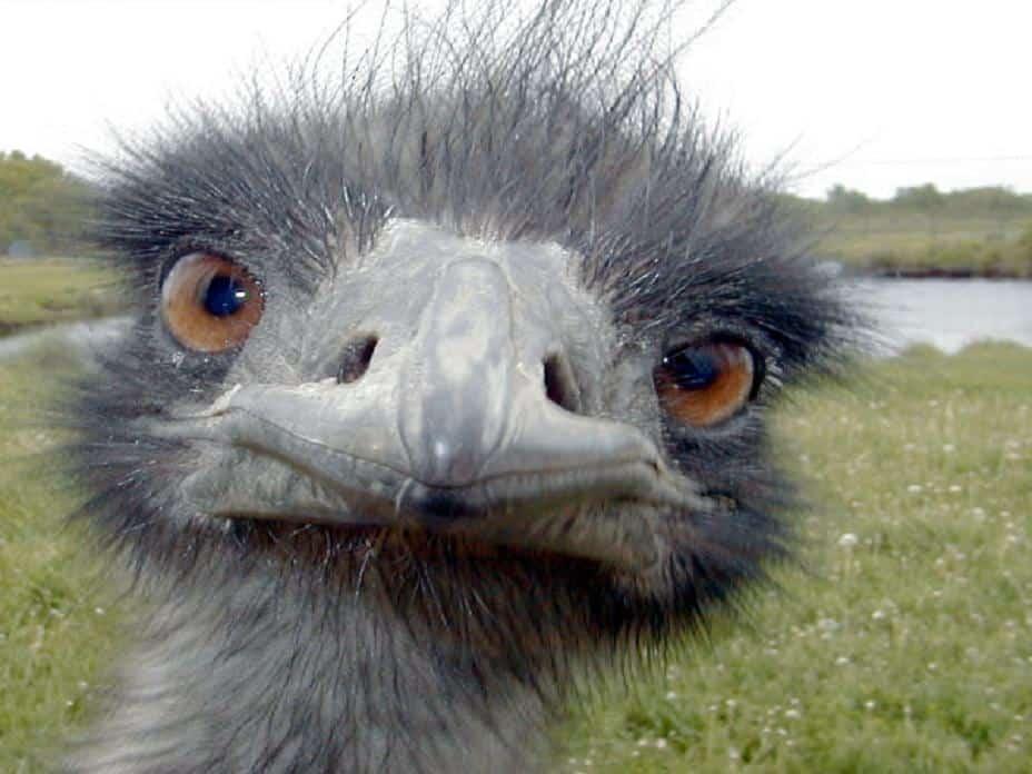 That's emu-zing!!!